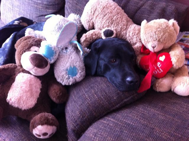 Toby de knuffelbeer