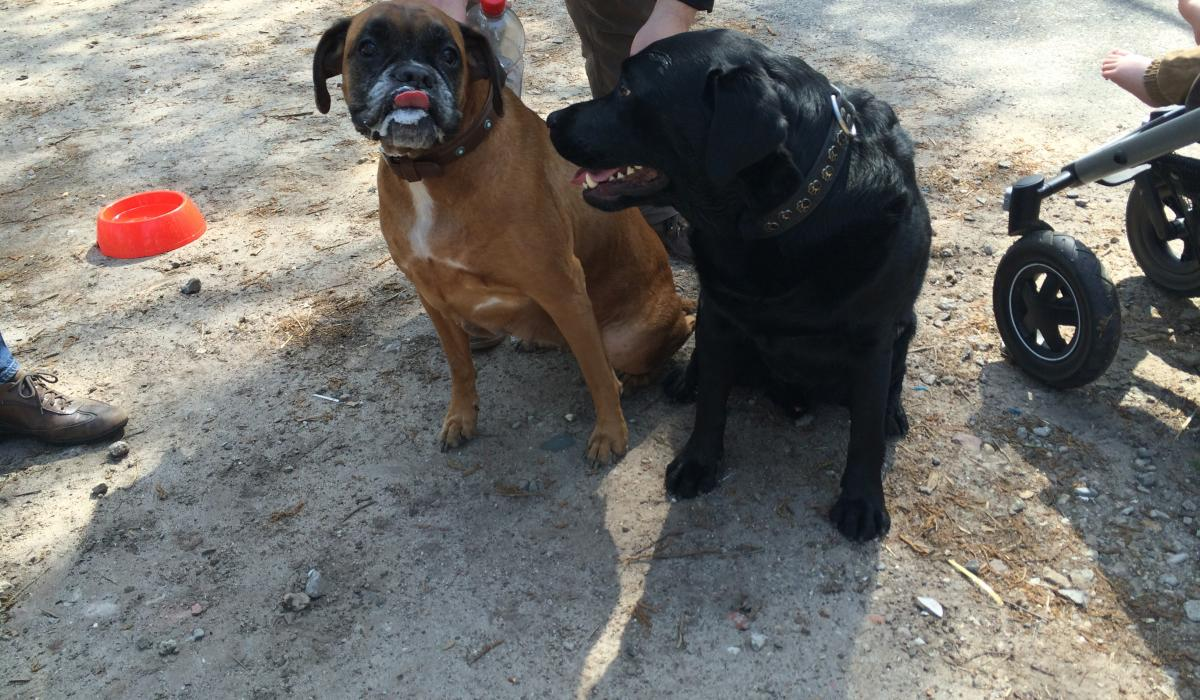 Toby en Bandit